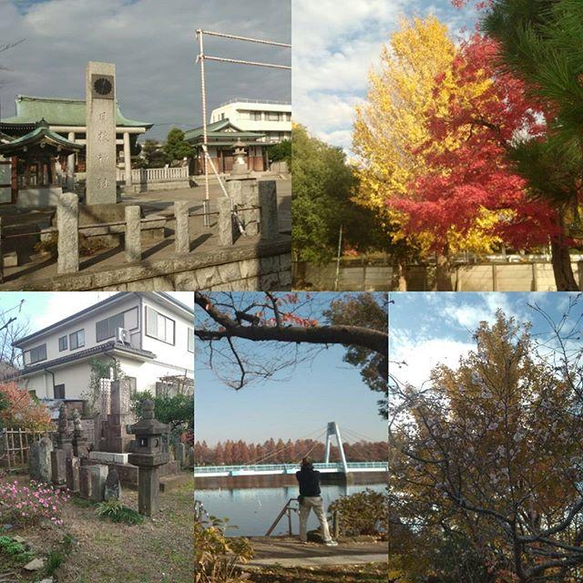 ポスティング季節外れの桜?秋を満喫ぜひ、吉川霊園にお越しください