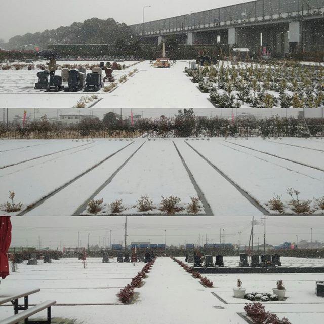 吉川霊園は雪がしんしんと降っています